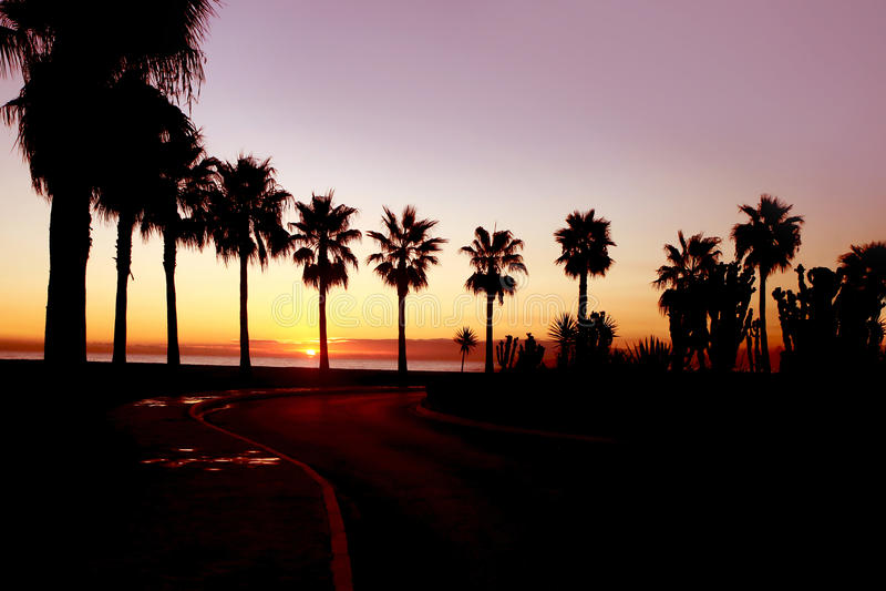 Salida del sol detrás de las palmeras imagen de archivo