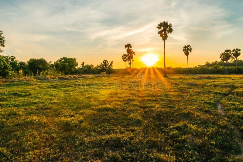 Salida del sol el campo en el patio trasero imagen de archivo