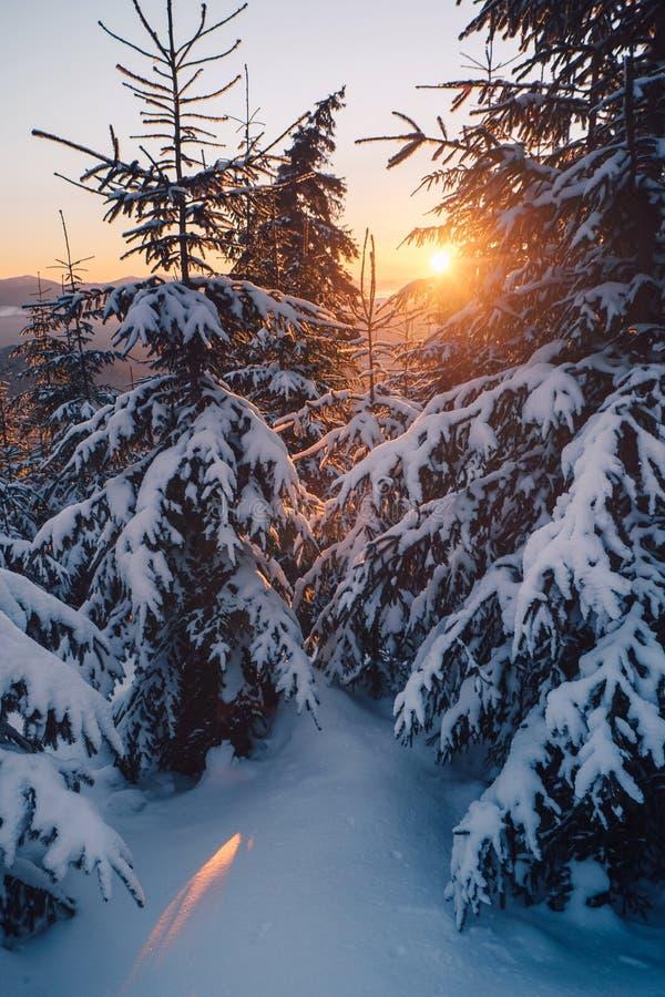 Salida del sol en el bosque nevado del invierno fotos de archivo libres de regalías