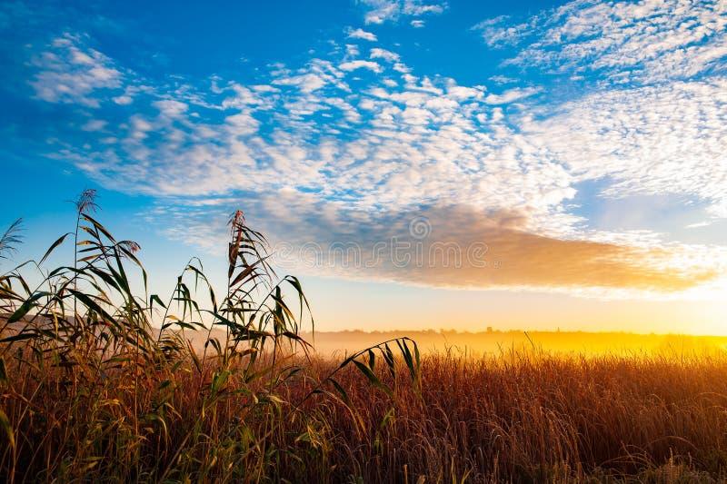 Salida del sol en el campo fotografía de archivo libre de regalías