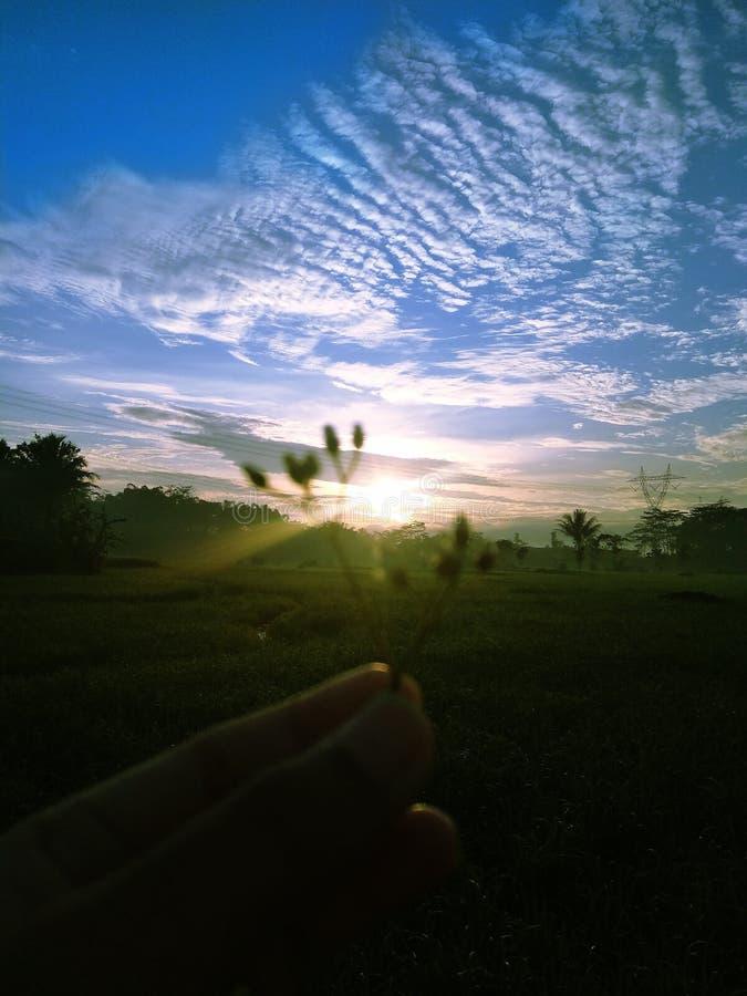 Salida del sol en el campo del verde de la pizca del vilage imágenes de archivo libres de regalías