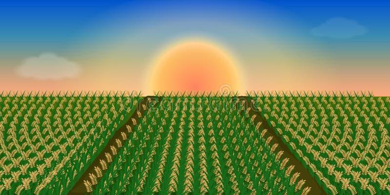 Salida del sol en el cielo en el campo del arroz ilustración del vector