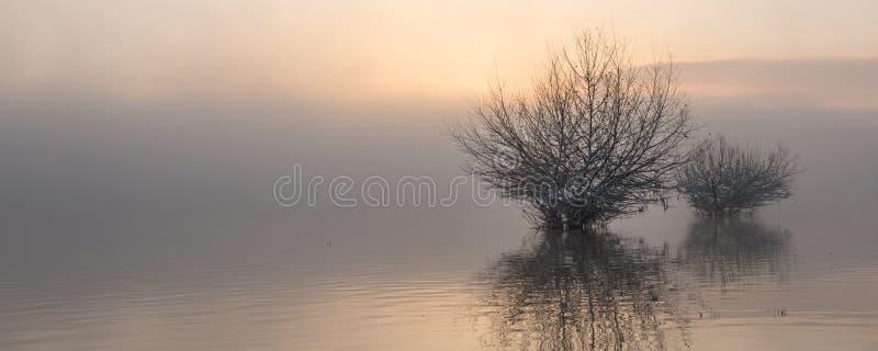 Salida del sol en el lago en niebla imagen de archivo