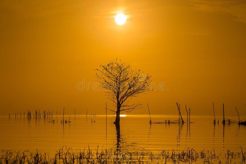 Salida del sol en el lago y el árbol deshojado imagen de archivo libre de regalías