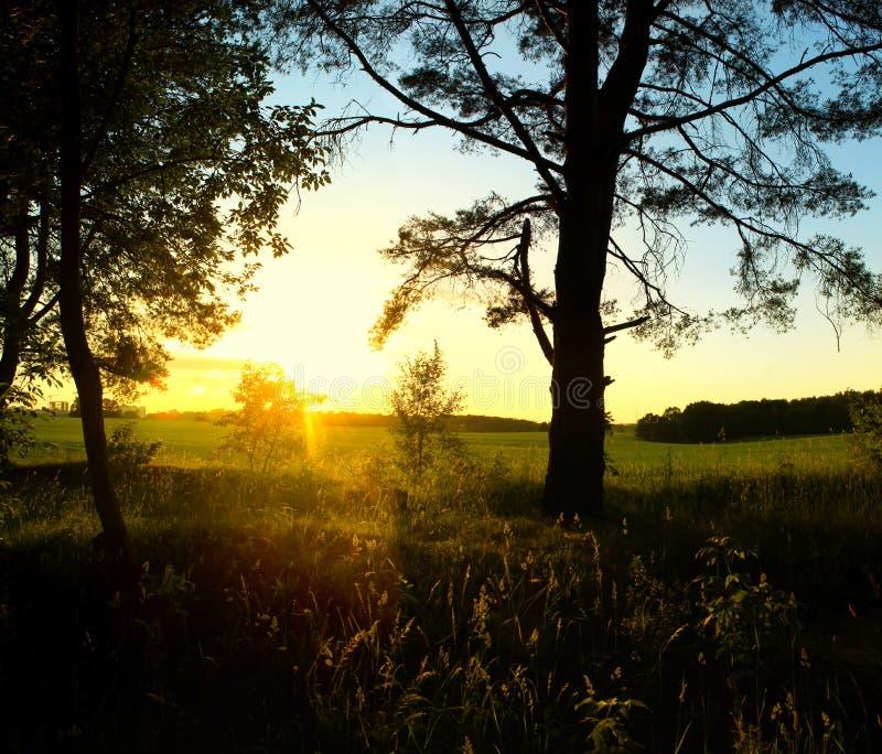 Salida del sol en el paisaje hermoso del bosque imagenes de archivo