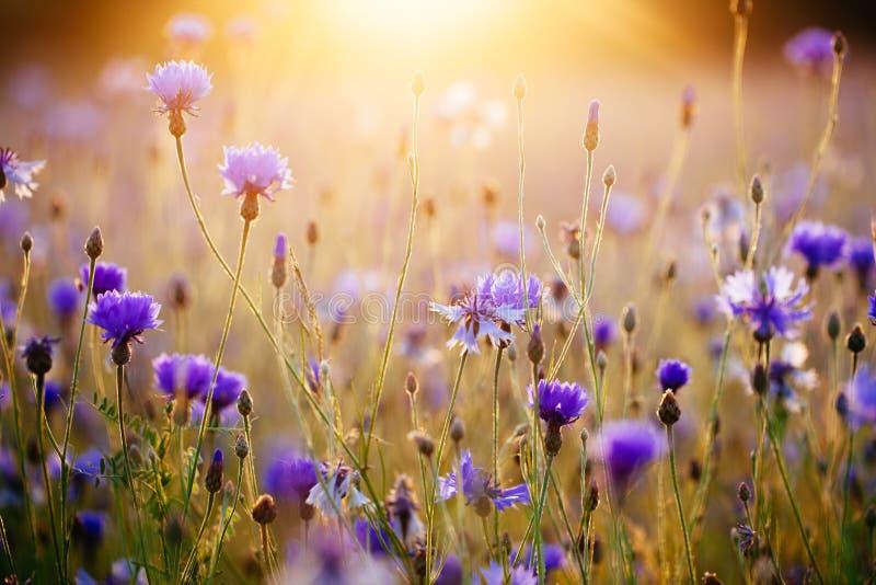 Salida del sol en el prado fotografía de archivo libre de regalías