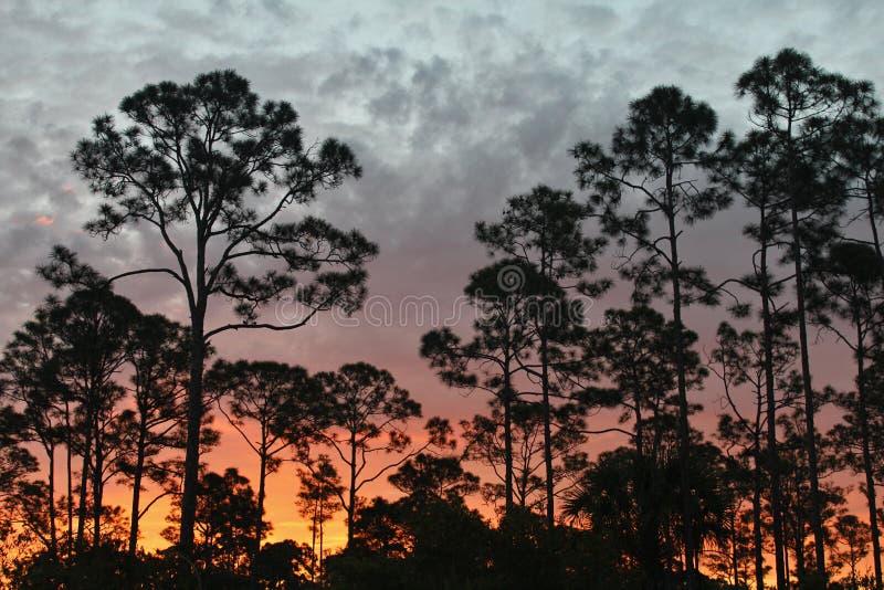 Salida del sol en el rastro de la Florida foto de archivo