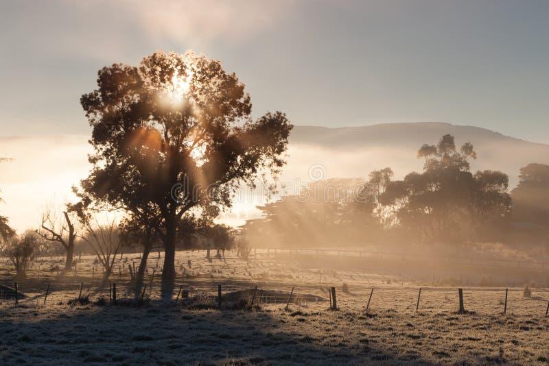 Salida del sol en el valle de Yarra en invierno foto de archivo libre de regalías