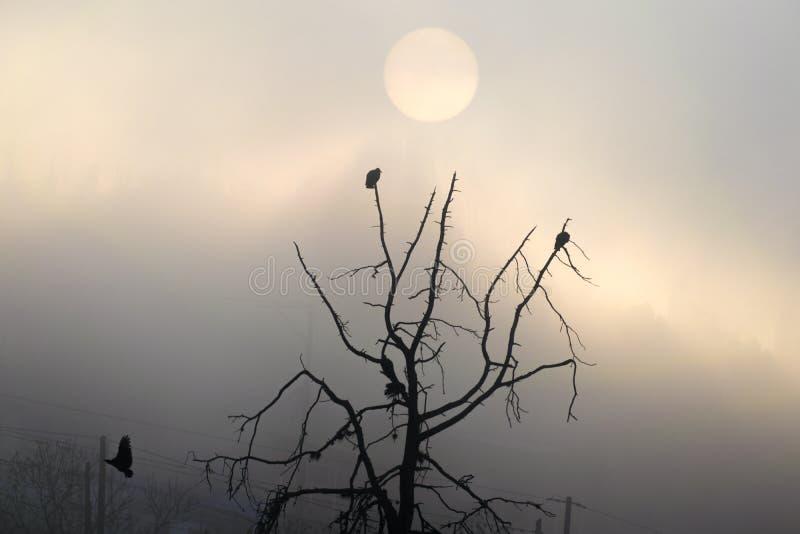 Salida del sol en Guatemala, ?rbol con los halcones que sacan vuelo Sun en la niebla imagen de archivo libre de regalías