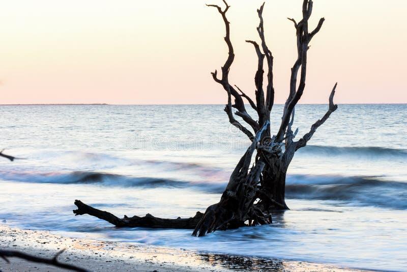 Salida del sol en la plantación de la bahía de la botánica, isla de Edisto, Carolina del Sur foto de archivo libre de regalías