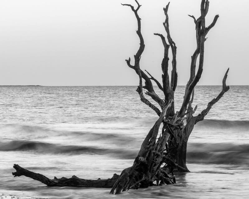 Salida del sol en la plantación de la bahía de la botánica, isla de Edisto, Carolina del Sur fotografía de archivo