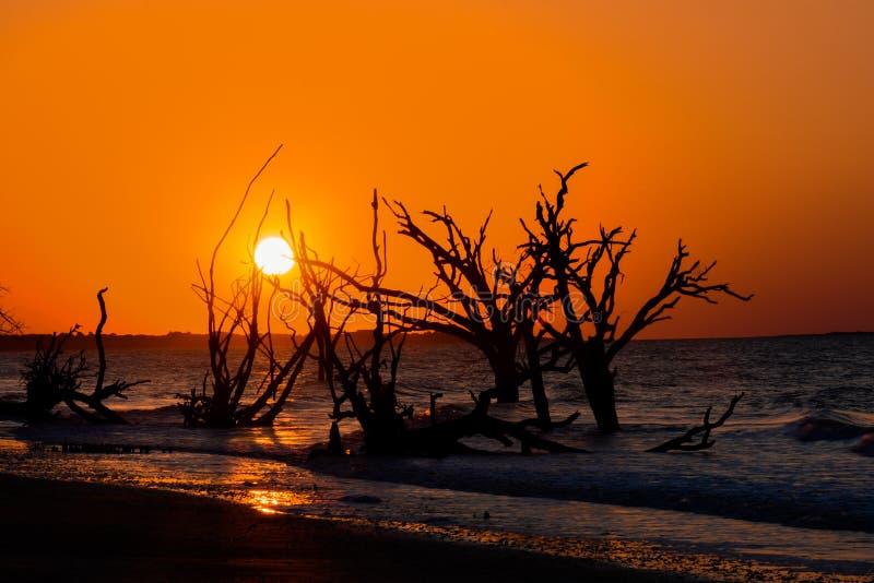 Salida del sol en la plantación de la bahía de la botánica, isla de Edisto, Carolina del Sur foto de archivo