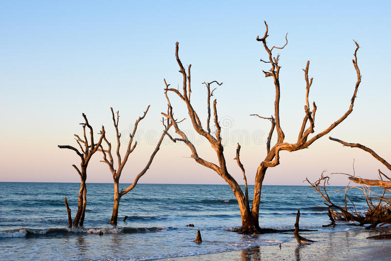 Salida del sol en la plantación de la bahía de la botánica, isla de Edisto, Carolina del Sur fotografía de archivo libre de regalías