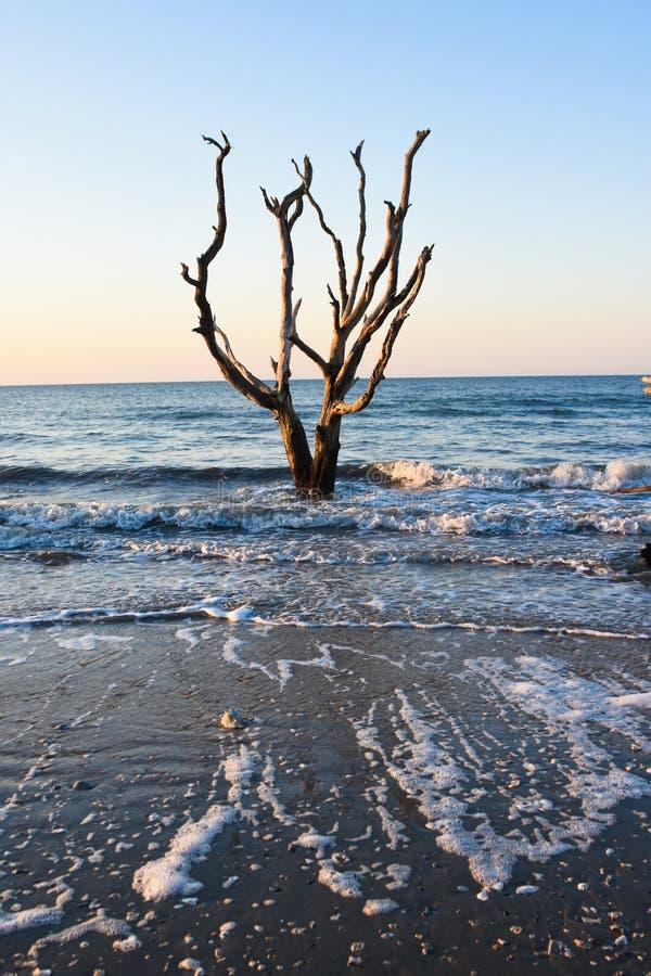 Salida del sol en la plantación de la bahía de la botánica, isla de Edisto, Carolina del Sur fotos de archivo