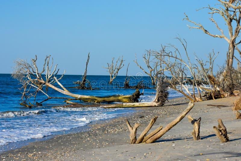 Salida del sol en la plantación de la bahía de la botánica, isla de Edisto, Carolina del Sur fotos de archivo libres de regalías