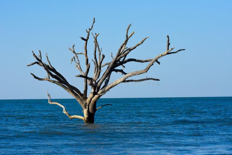 Salida del sol en la plantación de la bahía de la botánica, isla de Edisto, Carolina del Sur imagen de archivo
