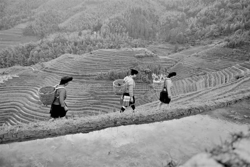Salida del sol en los campos del arroz en China imagenes de archivo