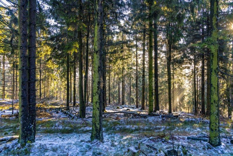 Salida del sol en madrugada en el bosque con el rayo de sol brillante fotografía de archivo libre de regalías