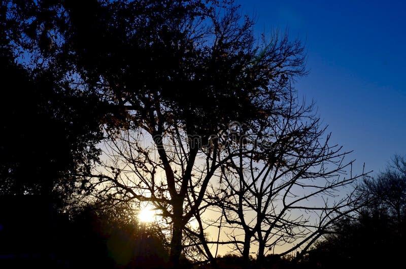 Salida del sol en Tejas imágenes de archivo libres de regalías