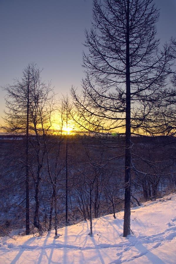 Salida del sol en tundra imagen de archivo libre de regalías