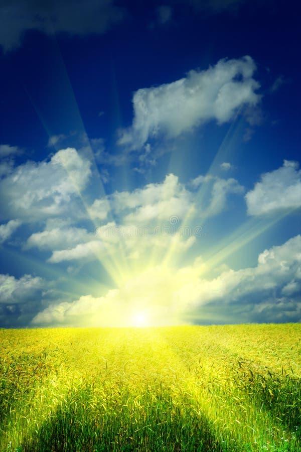 Salida del sol en un campo de trigo imagenes de archivo