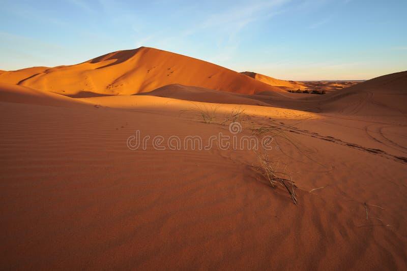 Salida del sol en una duna de arena grande en desierto del Sáhara imagen de archivo