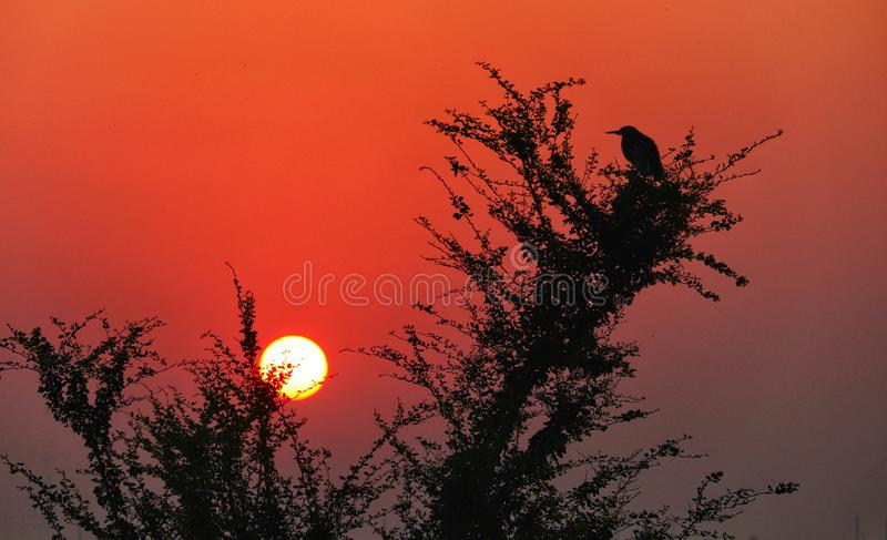 Salida del sol fresca con un pájaro fotografía de archivo libre de regalías