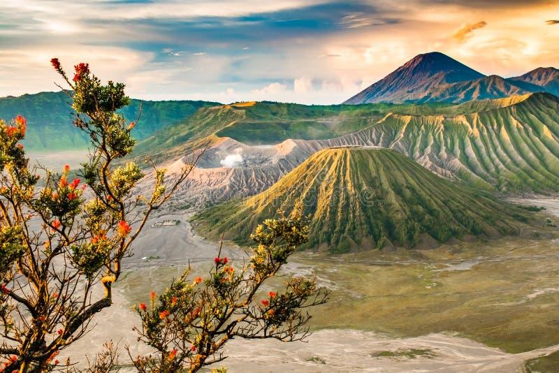 Salida del sol hermosa con el soporte Bromo, Java Oriental, Indonesia del punto de vista de los árboles foto de archivo
