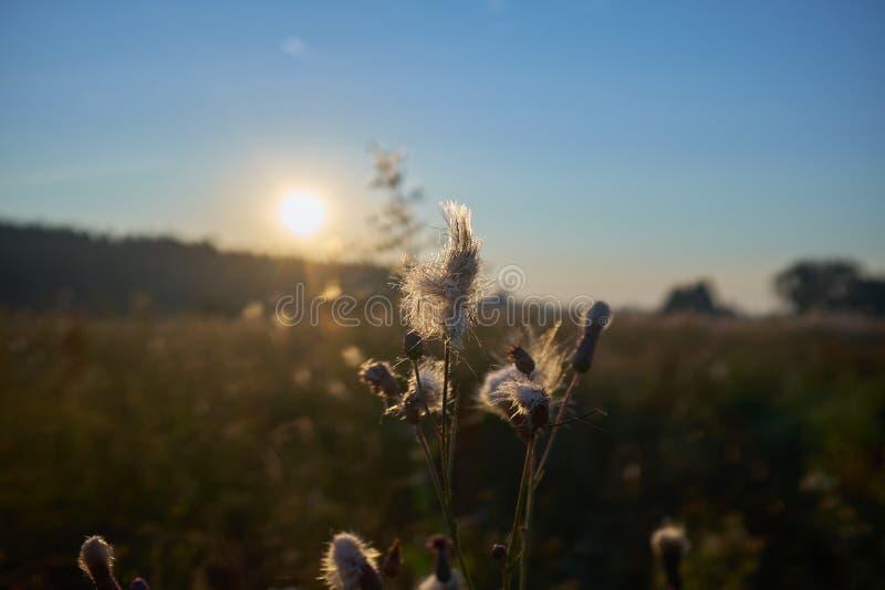 Salida del sol hermosa en Bielorrusia imagenes de archivo