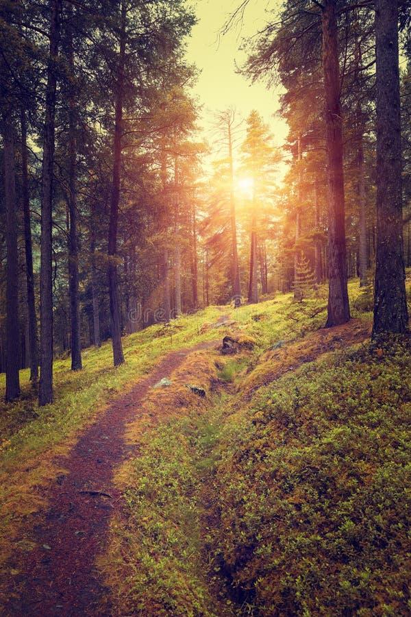 Salida del sol hermosa en bosque del otoño fotos de archivo