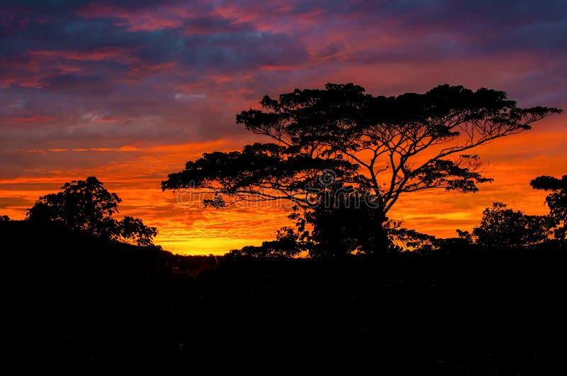 Salida del sol hermosa hacia fuera en el país con silueteado de árbol imagen de archivo