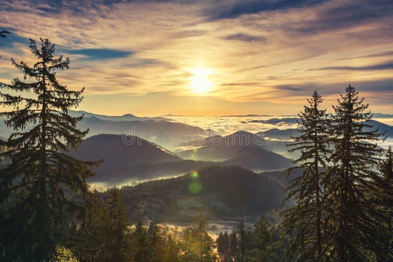 Salida del sol hermosa sobre bosque del pino en la cuesta de montaña fotos de archivo