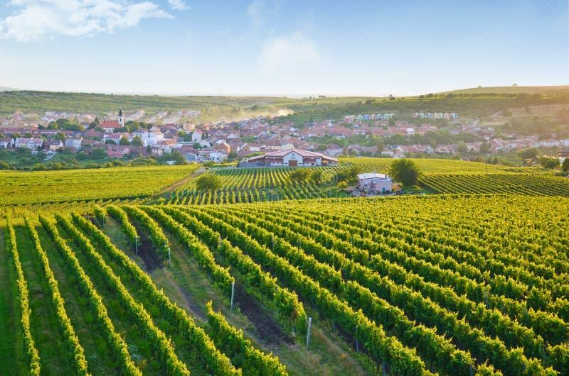 Salida del sol hermosa sobre el pueblo pintoresco Velke Pavlovice y los viñedos próximos, Moravia meridional, República Checa imagenes de archivo