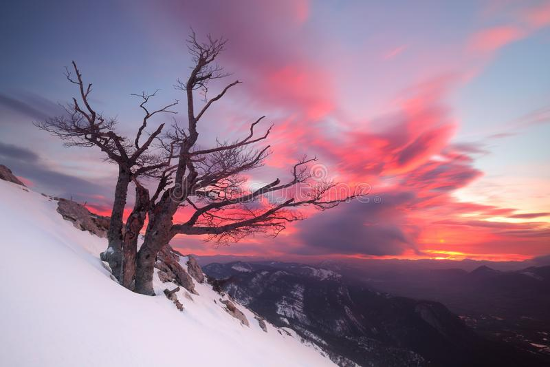 Salida del sol hermosa sobre un árbol solitario en la nieve fotos de archivo libres de regalías