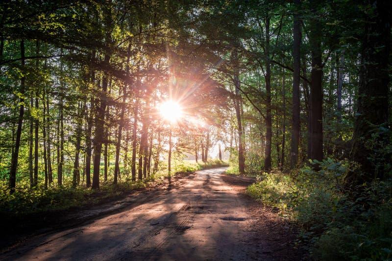 Salida del sol imponente en el bosque del verano en Polonia fotografía de archivo libre de regalías