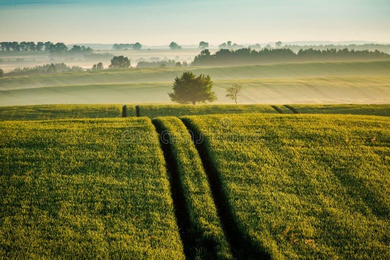 Salida del sol imponente en el campo de niebla en verano foto de archivo libre de regalías