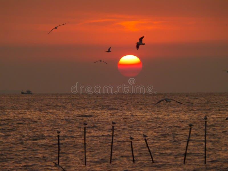 Salida del sol increíble con la gradación de las gaviotas del cielo y del vuelo del color rojo imágenes de archivo libres de regalías