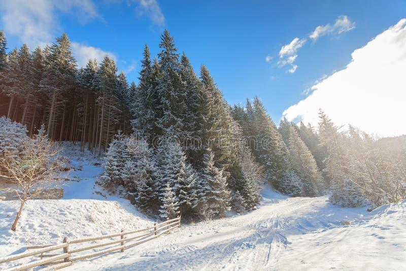 Salida del sol, invierno, bosque, nieve imagen de archivo