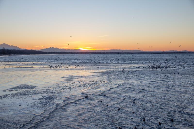 Salida del sol del invierno de la bahía de Semiahmoo, ondulaciones y pájaros, roca blanca, Canadá imágenes de archivo libres de regalías