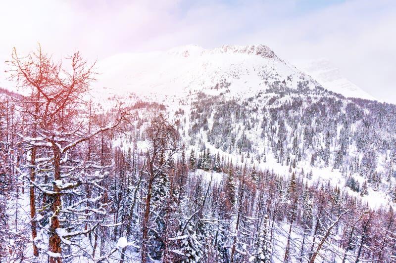 Salida del sol del invierno sobre las montañas Nevado en las montañas rocosas canadienses imágenes de archivo libres de regalías