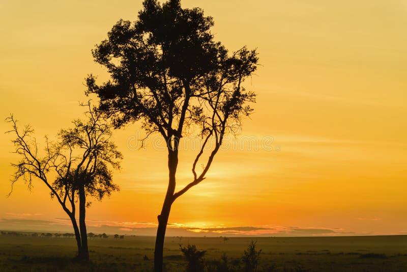 Salida del sol magnífica en África, safari foto de archivo