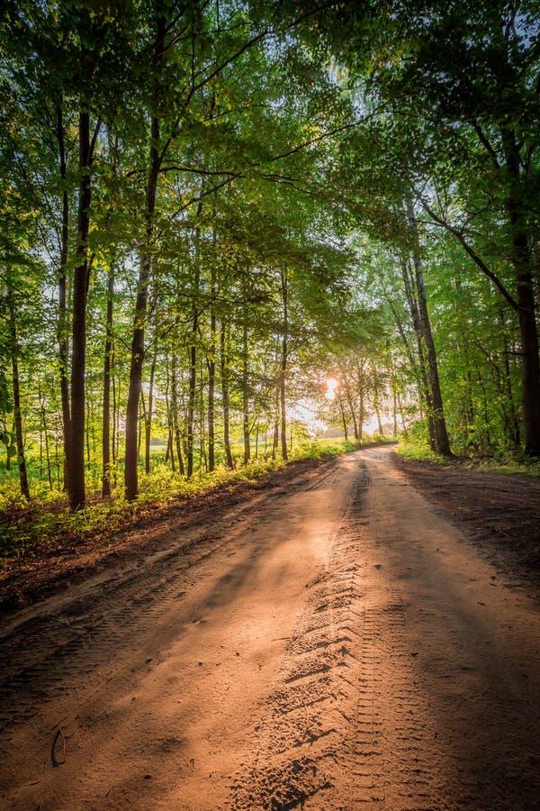 Salida del sol maravillosa en el bosque en Polonia fotografía de archivo