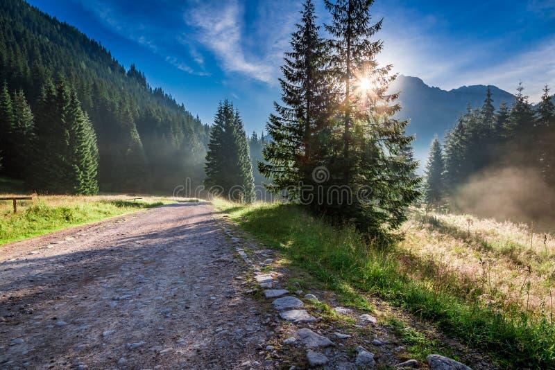 Salida del sol maravillosa en el valle Chocholowska en Tatras en verano fotografía de archivo libre de regalías