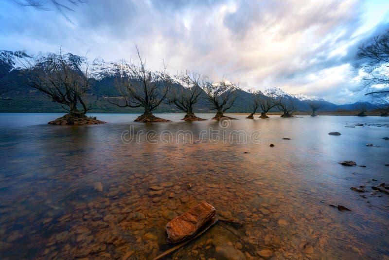 Salida del sol nublada fría en la fila famosa del sauce en Glenorchy, isla del sur, Nueva Zelanda foto de archivo