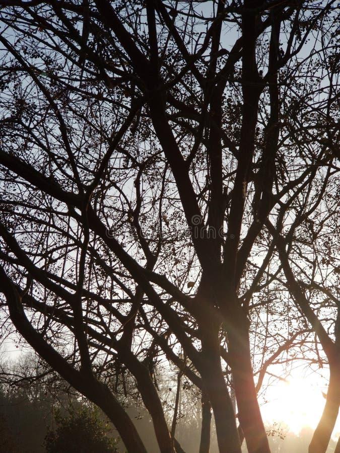 Salida del sol pacífica fotos de archivo