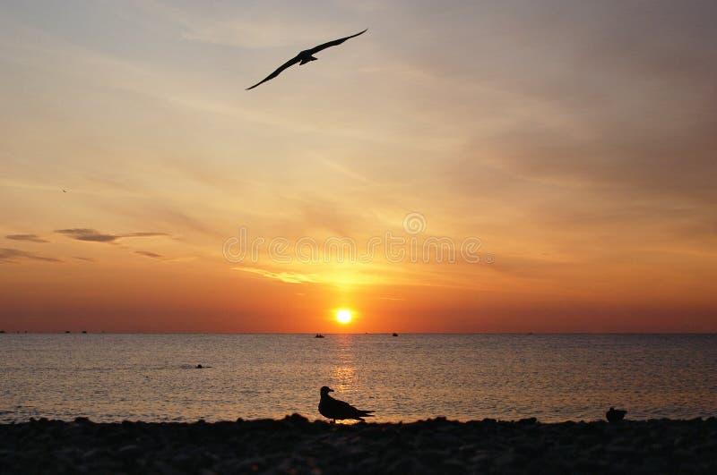 Salida del sol roja en el mar con la silueta de los pájaros fotos de archivo