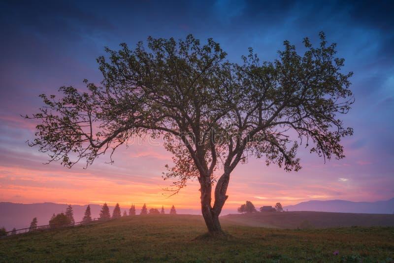 Download Salida Del Sol Roja Maravillosa En Un Valle De Niebla Imagen de archivo - Imagen de mañana, pintoresco: 100531567