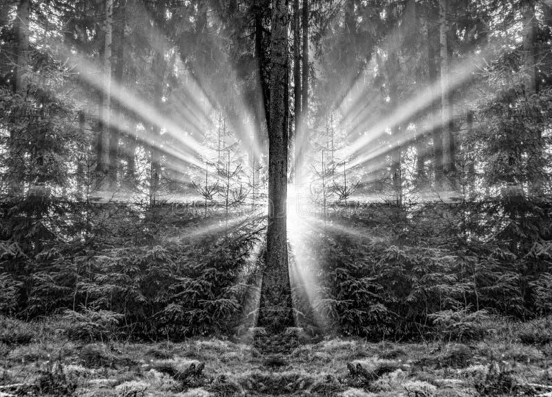 Salida del sol romántica en madrugada en el bosque con el rayo de sol brillante foto de archivo