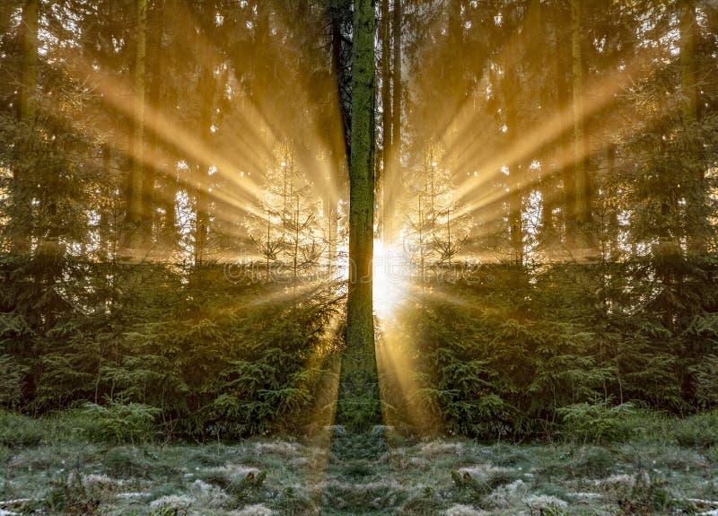Salida del sol romántica en madrugada en el bosque con el sunb brillante fotos de archivo