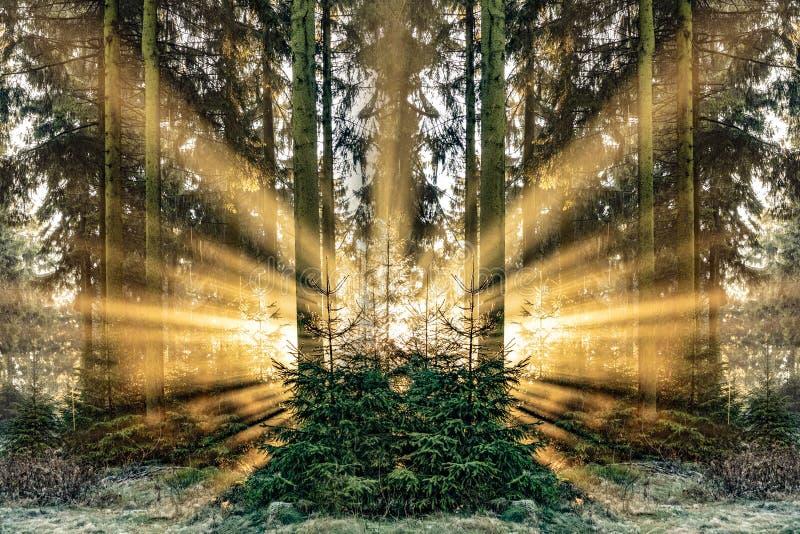 Salida del sol romántica en madrugada en el bosque con el sunb brillante imagen de archivo libre de regalías